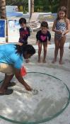 hermit crab racing